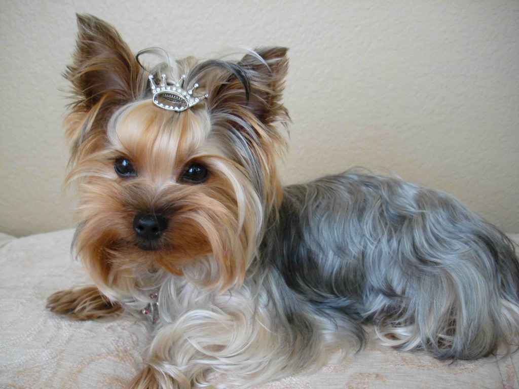 Princess Dog Toy